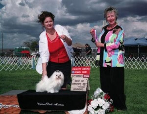 Prescott Arizona Kennel Club - Maltese Breed - September 2009 Winner